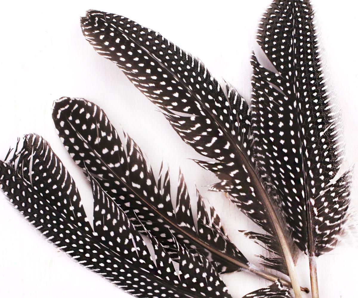 Картинки перо птицы черная с белыми крапинками